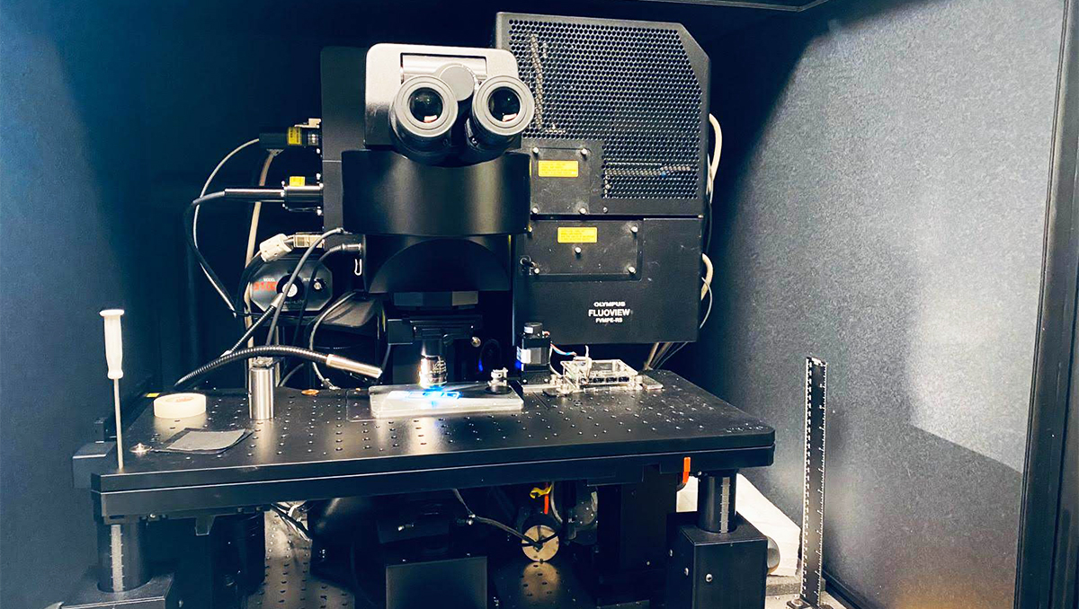 An advanced microscope developed by a former UCI postdoctoral researcher in the Laboratory for Fluorescence Dynamics can quickly and accurately assess the amount of scarring in damaged kidneys.