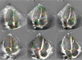 These echocardiogram images show the comparison between the automatic (red) and manual (green) segmentation of all four heart chambers for six typical subjects from the research dataset.