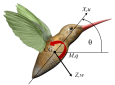 Researchers measured the three-dimensional wing and body kinematics of flapping wing insects before and after a projectile disturbed them in flight. They determined that the natural vibration of the insect wings induces a stabilizing action.