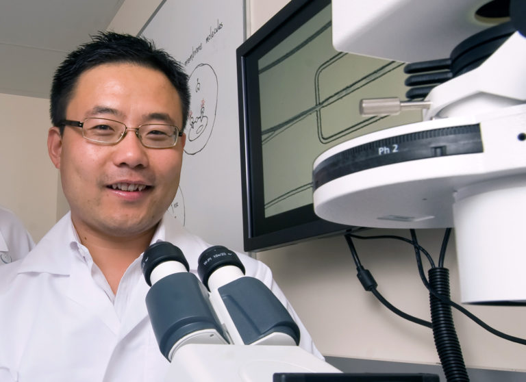 """Until now, stem cell therapies for autoimmune and neurodegenerative diseases have produced mixed results in clinical trials, partly because we don't know how the treatments work,"" says Weian Zhao, UCI associate professor. Steve Zylius / UCI"